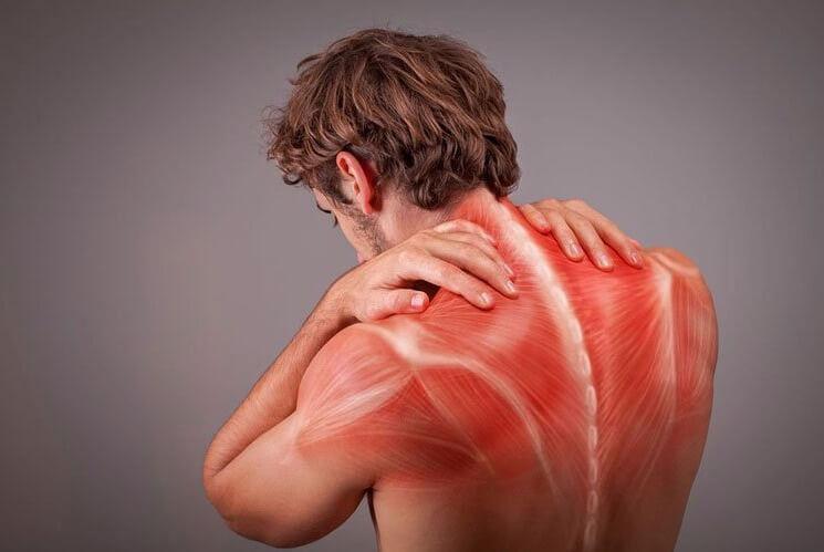 Recuperadores Musculares